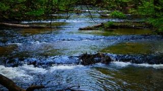Susiec, rzeka Tanew 2012, fot. DK_10