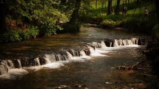 Susiec, rzeka Tanew 2012, fot. DK_13