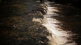 Susiec, rzeka Tanew 2012, fot. DK_18