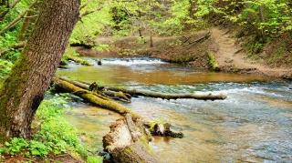 Susiec, rzeka Tanew 2012, fot. DK_1
